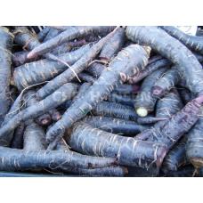 Экстракт чёрной моркови: